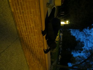 Morph Suit Man crawling like Spider Man. Photo by Molly Maschka