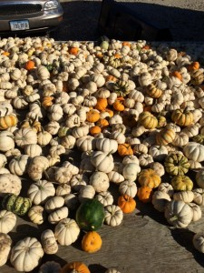Picking pumpkins is a wonderful activity to get friends together for a fun evening out. Photo by Karissa Vetsch